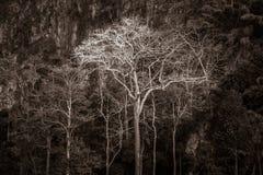 Μεγαλοπρεπές γιγαντιαίο δέντρο ζουγκλών, καταπληκτικό δασικό υπόβαθρο Στοκ φωτογραφία με δικαίωμα ελεύθερης χρήσης