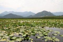 μεγαλύτερη λίμνη Μαυροβούνιο η skadar Sony dsc Βαλκανίων Στοκ Εικόνες