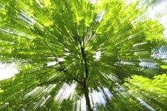 Μεγεθύνοντας δέντρο Στοκ Εικόνα