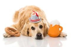 Μεθυσμένο σκυλί στοκ φωτογραφίες