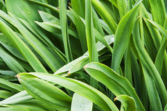 Μεθύστακας πράσινος Στοκ Εικόνες