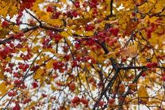 Μειωμένα δρύινα φύλλα στο φυσικό δάσος φθινοπώρου που φωτίζεται στοκ εικόνα με δικαίωμα ελεύθερης χρήσης