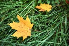 Μειωμένα δρύινα φύλλα στο φυσικό δάσος φθινοπώρου που φωτίζεται στοκ φωτογραφία