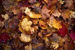 Μειωμένα δρύινα φύλλα στο φυσικό δάσος φθινοπώρου που φωτίζεται στοκ φωτογραφία με δικαίωμα ελεύθερης χρήσης