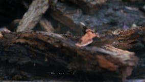 Μειωμένα κομμάτια του ξύλου με το πριονίδι απόθεμα βίντεο