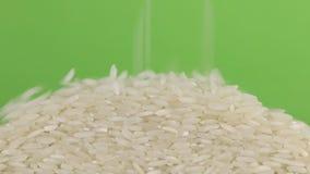 Μειωμένα σιτάρια του ρυζιού σε έναν σωρό του ρυζιού σε μια πράσινη οθόνη απόθεμα βίντεο