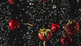 Μειωμένα φρέσκα φράουλες και κεράσια που καταβρέχουν στο λαμπιρίζοντας νερό στο μαύρο υπόβαθρο o φιλμ μικρού μήκους