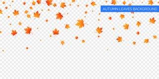 Μειωμένα φύλλα φθινοπώρου στο διαφανές υπόβαθρο Διανυσματική φθινοπωρινή πτώση φυλλώματος των φύλλων σφενδάμου Σχέδιο υποβάθρου φ διανυσματική απεικόνιση