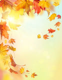 Μειωμένα φύλλα φθινοπώρου Στοκ Εικόνα