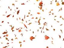 μειωμένα φύλλα Στοκ φωτογραφίες με δικαίωμα ελεύθερης χρήσης