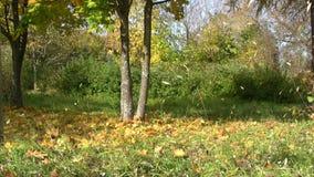 Μειωμένα φύλλα φθινοπώρου φιλμ μικρού μήκους
