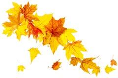 μειωμένα φύλλα φθινοπώρο&upsilo Στοκ φωτογραφίες με δικαίωμα ελεύθερης χρήσης