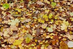 μειωμένα φύλλα φθινοπώρο&upsilo Στοκ εικόνα με δικαίωμα ελεύθερης χρήσης
