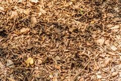 μειωμένα φύλλα Στοκ εικόνα με δικαίωμα ελεύθερης χρήσης