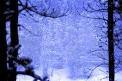 Μειωμένες νιφάδες χιονοθύελλας θύελλας χιονιού στο χειμώνα στοκ εικόνες