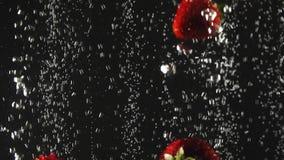 Μειωμένες φρέσκες φράουλες που καταβρέχουν στο λαμπιρίζοντας νερό στο μαύρο υπόβαθρο o απόθεμα βίντεο