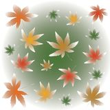 Μειωμένη απεικόνιση φύλλων σφενδάμου της Misty απεικόνιση αποθεμάτων