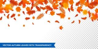 Μειωμένη πτώση φύλλων σχεδίων φύλλων φθινοπώρου autumanl στο διανυσματικό διαφανές υπόβαθρο διανυσματική απεικόνιση
