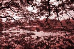 Μειωμένοι κλάδοι Στοκ φωτογραφία με δικαίωμα ελεύθερης χρήσης