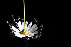 μειωμένο λουλούδι Στοκ φωτογραφία με δικαίωμα ελεύθερης χρήσης