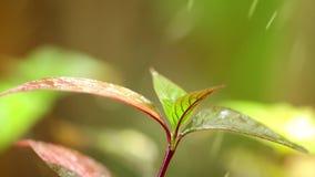 Μειωμένο περιβάλλον φύσης φυλλώματος εγκαταστάσεων σταγόνων βροχής φιλμ μικρού μήκους