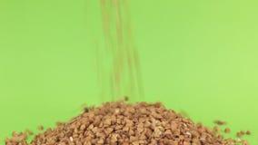 Μειωμένο φαγόπυρο σιταριών στο σωρό του φαγόπυρου σε μια πράσινη οθόνη φιλμ μικρού μήκους
