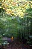 μειωμένο φύλλο φθινοπώρο&up Στοκ Εικόνα