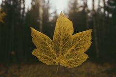 μειωμένο φύλλο Στοκ φωτογραφία με δικαίωμα ελεύθερης χρήσης