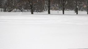 Μειωμένο χιόνι που καλύπτει τα δέντρα απόθεμα βίντεο