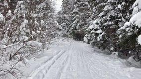 Μειωμένο χιόνι σε ένα χειμερινό πάρκο με τα χιονισμένα δέντρα Χειμερινός δασικός περίπατος απόθεμα βίντεο