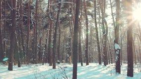Μειωμένο χιόνι στο χειμερινό δάσος απόθεμα βίντεο