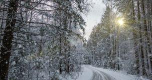 Μειωμένο χιόνι στο χειμερινό δάσος, CINEMAGRAPH, βρόχος, 1080p φιλμ μικρού μήκους