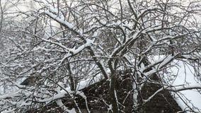 Μειωμένο χιόνι στο χωριό με το δέντρο απόθεμα βίντεο