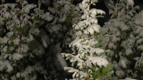 Μειωμένο χιόνι τη νύχτα απόθεμα βίντεο