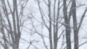 μειωμένο χιόνι φιλμ μικρού μήκους