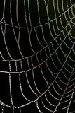 μειώνεται spriderweb Στοκ φωτογραφίες με δικαίωμα ελεύθερης χρήσης