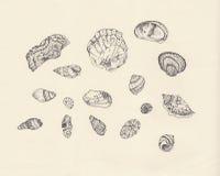 μελέτη κοχυλιών θάλασσας απεικόνιση αποθεμάτων