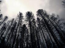 Μελαγχολικό, κρύο, εκλείψας δάσος Στοκ Εικόνες