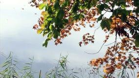 Μελαγχολικό φθινόπωρο Ασία ακτών φύσης ταξιδιών δέντρων κλάδων αέρα φύσης φρεσκάδας θερμότητας ειρήνης αέρα νερού ένας κλάδος χρώ απόθεμα βίντεο