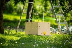 Μελισσοκομία Συλλογή του δραπετευμένου σμήνου μελισσών από ένα δέντρο Υπόβαθρο μελισσουργείων Ένα σμήνος των ευρωπαϊκών μελισσών  στοκ εικόνα