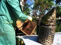 μελισσοκομία Στοκ εικόνα με δικαίωμα ελεύθερης χρήσης