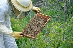 Μελισσοκόμος με ένα πλαίσιο των μελισσών Στοκ εικόνες με δικαίωμα ελεύθερης χρήσης