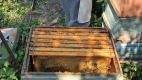 Μελισσοκόμος που ελέγχει τα πλαίσια σε μια κυψέλη μελισσών απόθεμα βίντεο