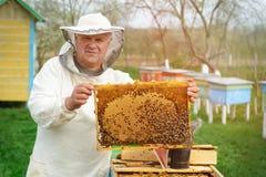 Μελισσοκόμος που κρατά ένα κυψελωτό σύνολο των μελισσών Μελισσοκόμος στο προστατευτικό workwear κυψελωτό πλαίσιο επιθεώρησης στο  Στοκ Φωτογραφία