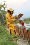 Μελισσοκόμος στην εργασία με την κηρήθρα Στοκ φωτογραφία με δικαίωμα ελεύθερης χρήσης