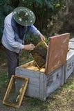 μελισσοκόμος Στοκ εικόνες με δικαίωμα ελεύθερης χρήσης