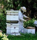 μελισσοκόμος Στοκ Φωτογραφία