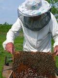 μελισσοκόμος Στοκ φωτογραφία με δικαίωμα ελεύθερης χρήσης