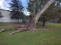 Μεμονωμένα δέντρο στοκ εικόνες με δικαίωμα ελεύθερης χρήσης