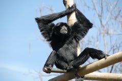 μεμονωμένος πίθηκος στοκ φωτογραφία με δικαίωμα ελεύθερης χρήσης